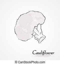 cauliflower - Hand drawn vector whire cauliflower vegetable...