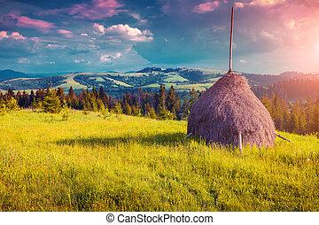 Haymaking in a Carpathian village Ukraine, Europe Instagram...