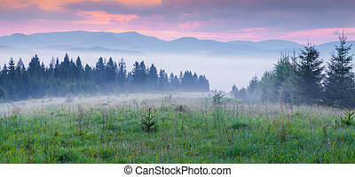 Natural summer scene in Carpathian mountains Fresh grass...