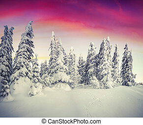 Beautiful winter landscape in the mountain forest. -...