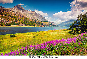 Sunny summer scene on the Silsersee lake in Swiss Alps with...