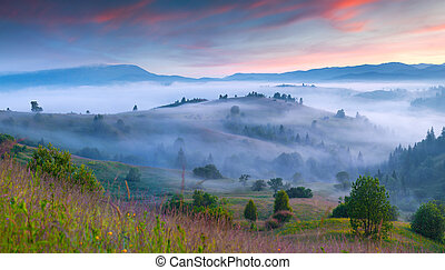 Natural summer scene in the mountain valley. Foggy morning...