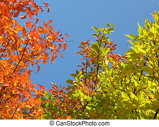 Autumn colors - Bright autumn colors.