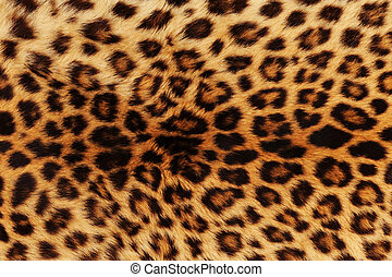 leopard skin - Leopard skin will make for great background.