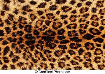 Leopardo, pele