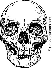 skull - Vector black and white illustration of human skull...