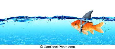 petit,  fish,  ambitions