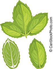 Mint leaves Vector illustration