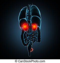kidneys disease illustration