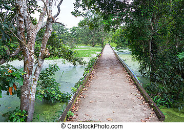 Concrete Path through the Jungle - Concrete path through the...