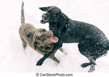 Winter fun - Two dogs playing in the snow
