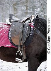 Horse with a saddle on the  snow