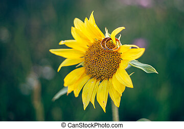 Two wedding rings lie on a sunflower