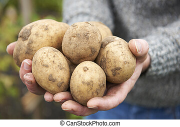 Man Holding Home Grown Potatoes