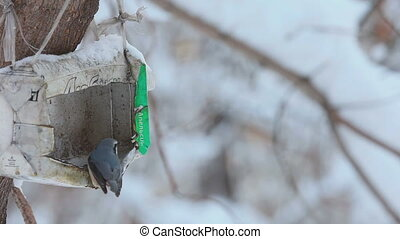Birds in the winter park - Birds eating seeds from the...