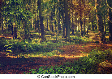 North scandinavian forest - North scandinavian pine forest,...