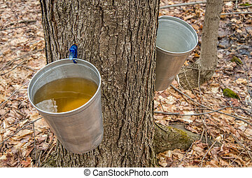 Pail used to collect sap of maple trees to produce maple...