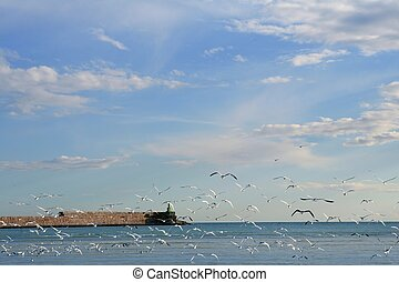 Blue Mediterranean view in with lots of seagull flying