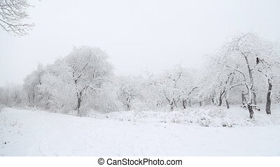 trees covered with snow
