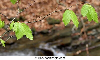 plants on the background of moving water - a plants on the...