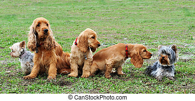 five little dogs sitting in a field