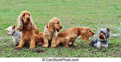 five little dogs sitting in a field