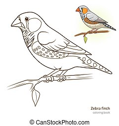 Zebra finch bird coloring book vector - Zebra finch bird...