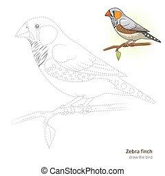 Zebra finch bird learn to draw vector - Zebra finch learn...