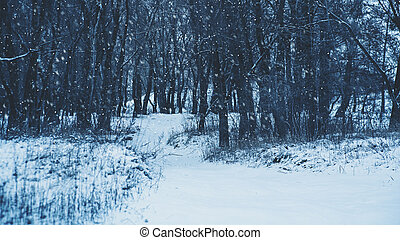 Winter forest and snow fall, abstract seasonal backgrounds
