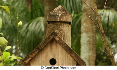 Bird House slow panning shot - Nature bird house slow...