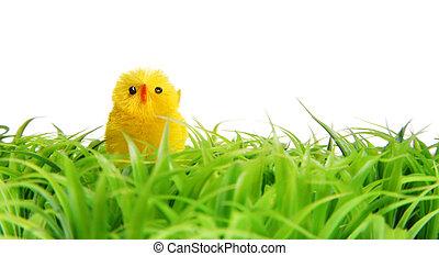 Paques, poussin, sur, vert, herbe