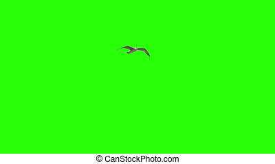Lonely Bird On Chroma Key - Lonely Sagull On Chroma Key