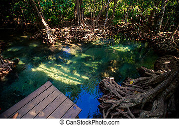 mangrove trees with roots green water rostrum under sunlight...