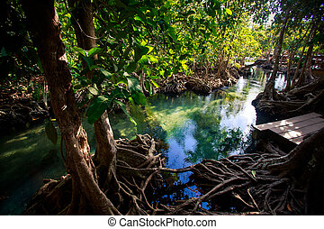 mangrove trees reflected in water roots rostrum under...