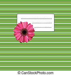 gerbera on the green yellow background
