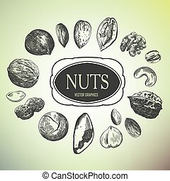 hand drawn nuts - hand drawn sketches of various kinds of...