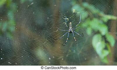 big spider on web - Close up of cobweb with spider.Big...