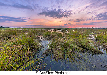 Marsh landscape with pastel colors in sunset and large...