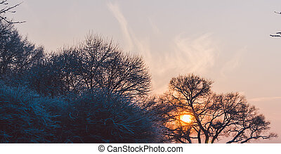 Sunset In Park - beautiful sunset in the winter city park