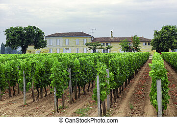 Vineyard in Gironde Aquitaine - Country landscape with...