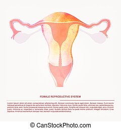 Vector illustration of women's sexual reproductive organ -...