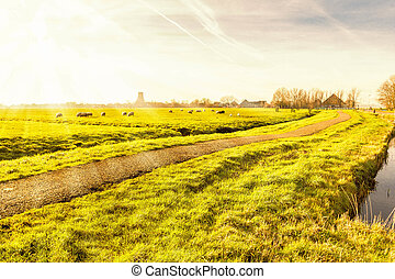 Rural landscape in Holland
