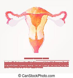 Vector illustration of womens sexual reproductive organ, the...