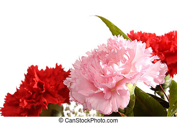 Carnations - Three carnations isolated on white Greeting...