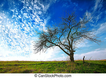 tree in a field on blue sky