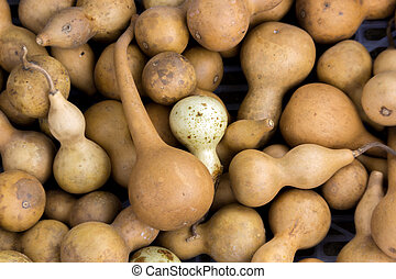 Bottle Gourd fruite - close up Bottle Gourd fruite for...