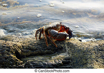 Crab at a sea coast - Crab in beams of the evening sun on...