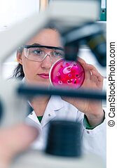 Scientist examining solution in petri dish at a laboratory