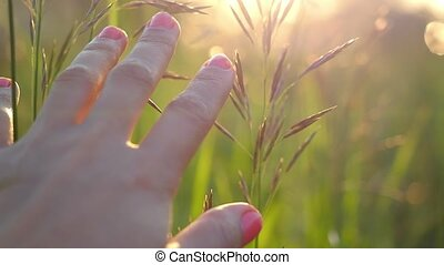 Female hand reaching for the sunat field in golden sunset light in slowmotion