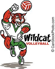 wildcat volleyball - cute wildcat volleyball team design...